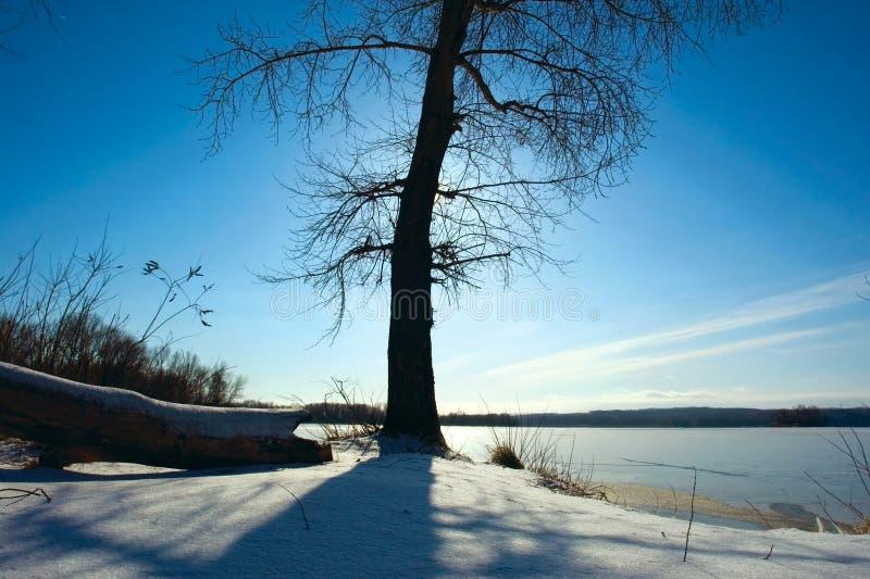 Árvore despida de encontro ao sol no inverno foto de stock royalty free