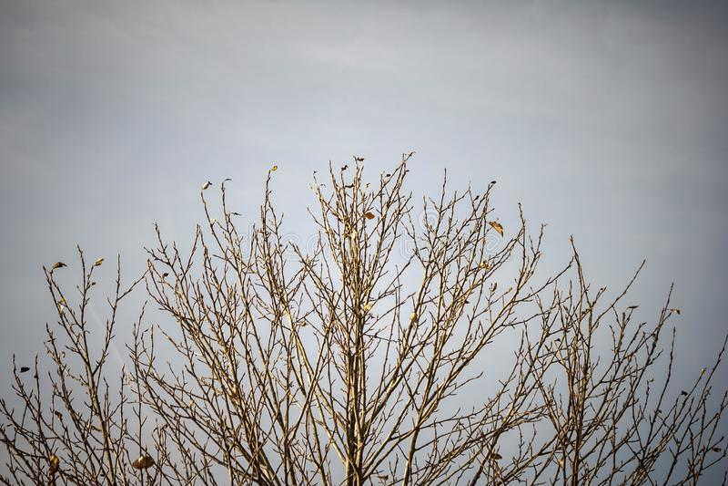 Árvore despida, voada imagens de stock