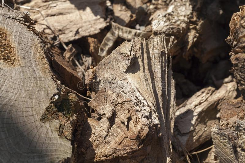 Árvore destruída imagem de stock