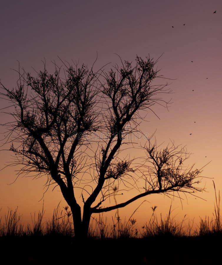 Árvore do Backlighting fotografia de stock