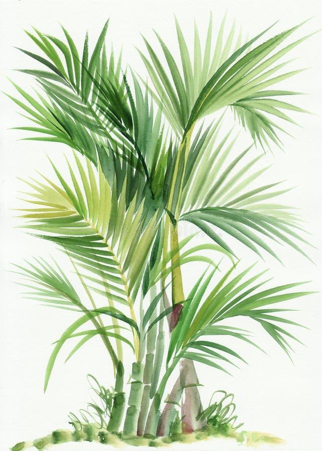 Árvore do bambu da palma ilustração stock