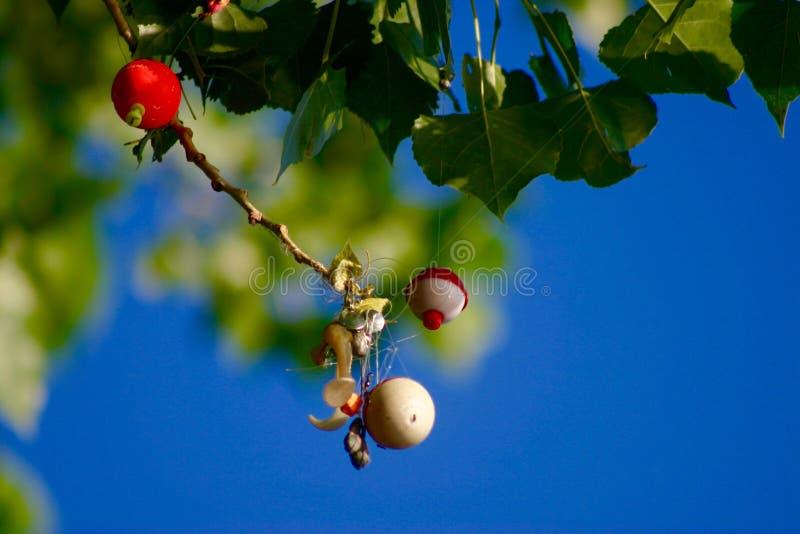Árvore do Bobber fotografia de stock royalty free