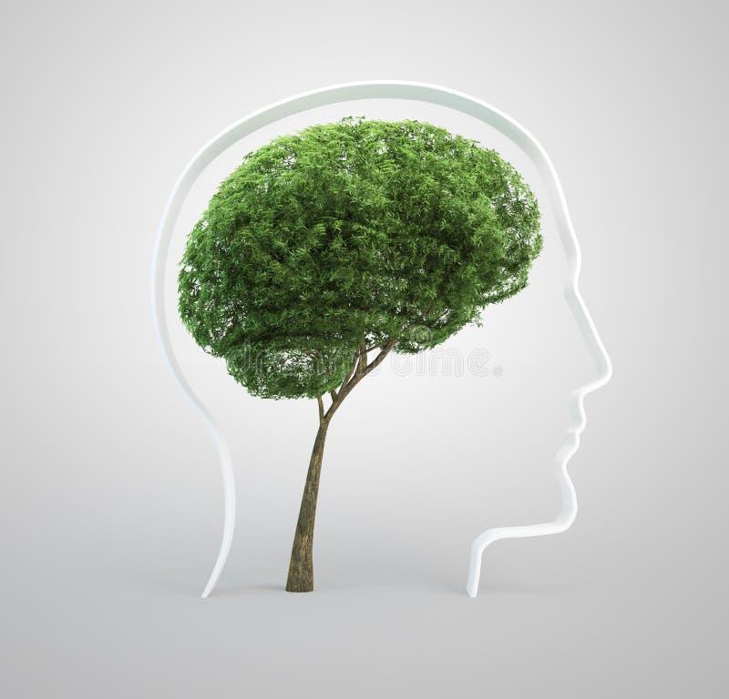 Árvore do cérebro - cabeça humana fotos de stock