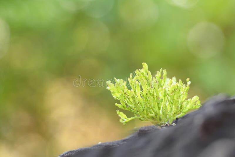 A árvore do cacto é colocada em uma rocha com um fundo verde da natureza Coleção de várias plantas do cacto e da planta carnuda fotos de stock