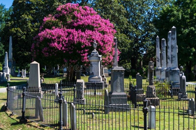 Árvore do cemitério na flor fotografia de stock royalty free