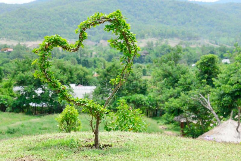 Árvore do coração com amor imagem de stock