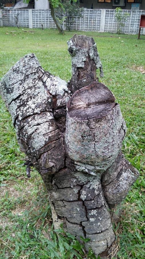 A árvore do corte da madeira ninguém importa-se fotos de stock royalty free