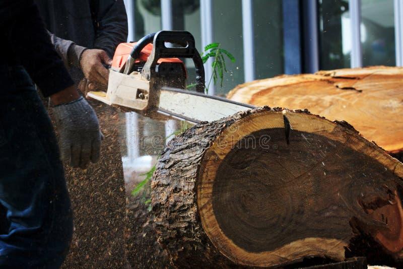 Árvore do corte do homem do trabalhador pelo motor da serra de cadeia imagem de stock