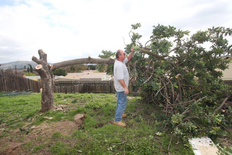 Árvore do corte do homem para baixo fotografia de stock