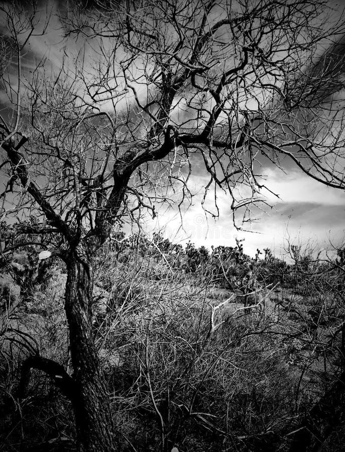 Árvore do deserto fotografia de stock royalty free