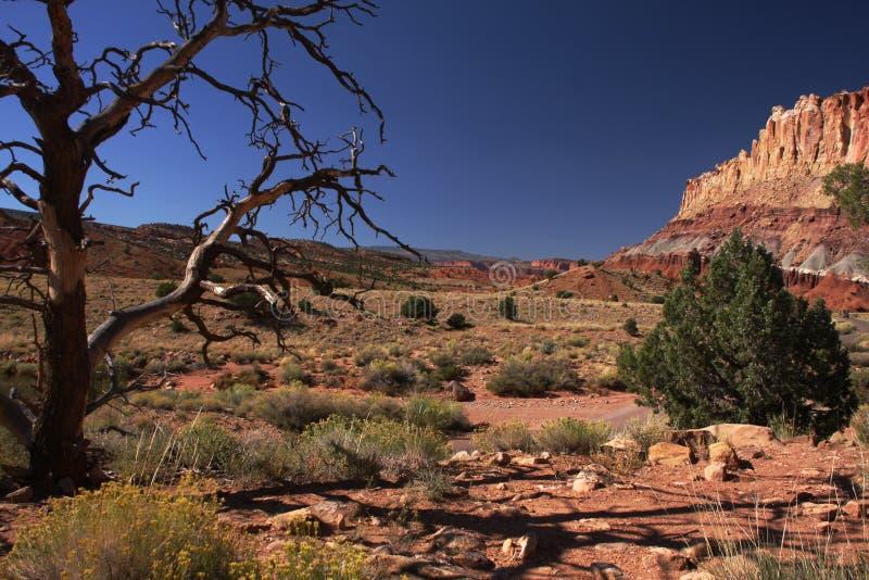 Download Árvore do deserto foto de stock. Imagem de garganta, capitol - 16859214