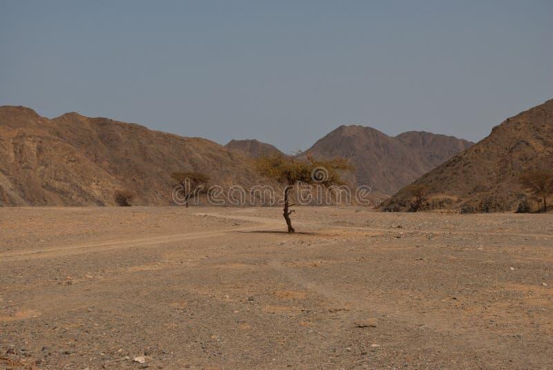 Árvore do deserto fotos de stock