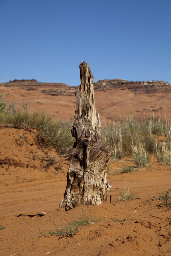Árvore do deserto fotos de stock royalty free