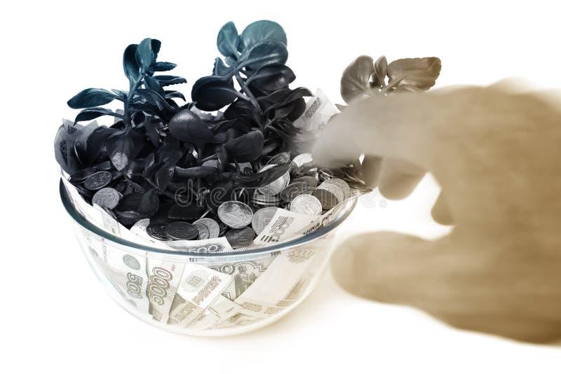 Árvore do dinheiro imagens de stock royalty free