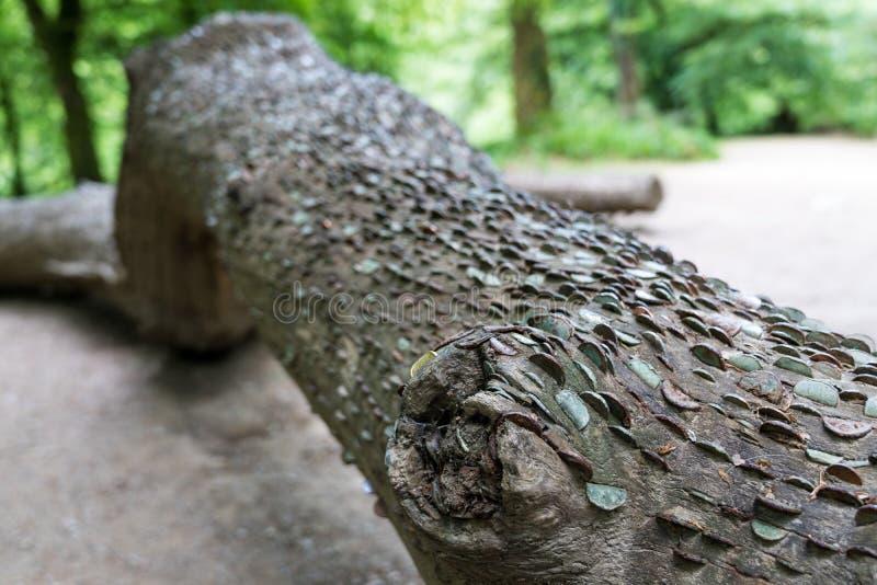 Árvore do dinheiro fácil foto de stock royalty free