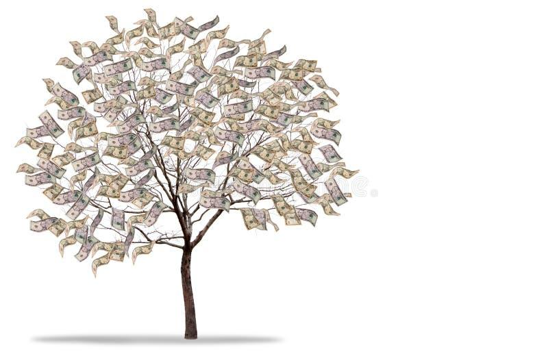 Árvore do dinheiro no fundo branco foto de stock