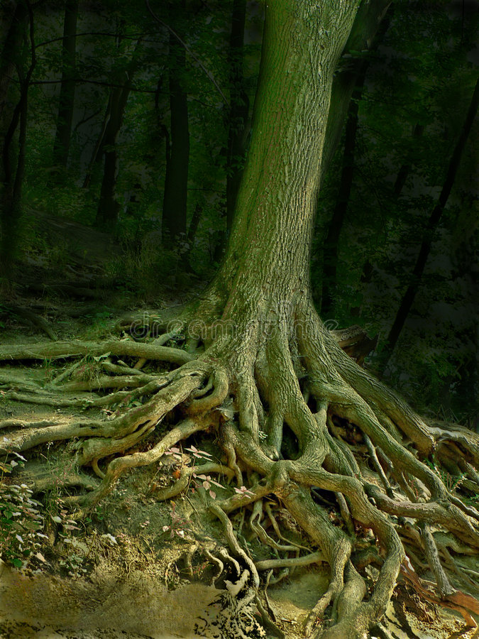 Árvore do feiticeiro com raizes foto de stock