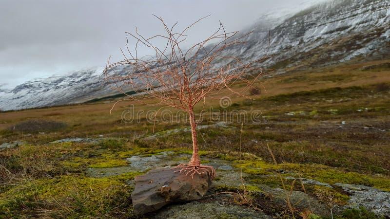 Árvore do fio de cobre em uma cena natural fotos de stock royalty free