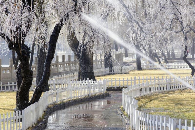 Árvore do gelo imagens de stock royalty free