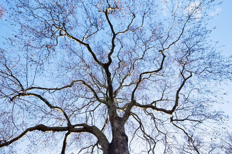 Árvore do inverno fotografia de stock