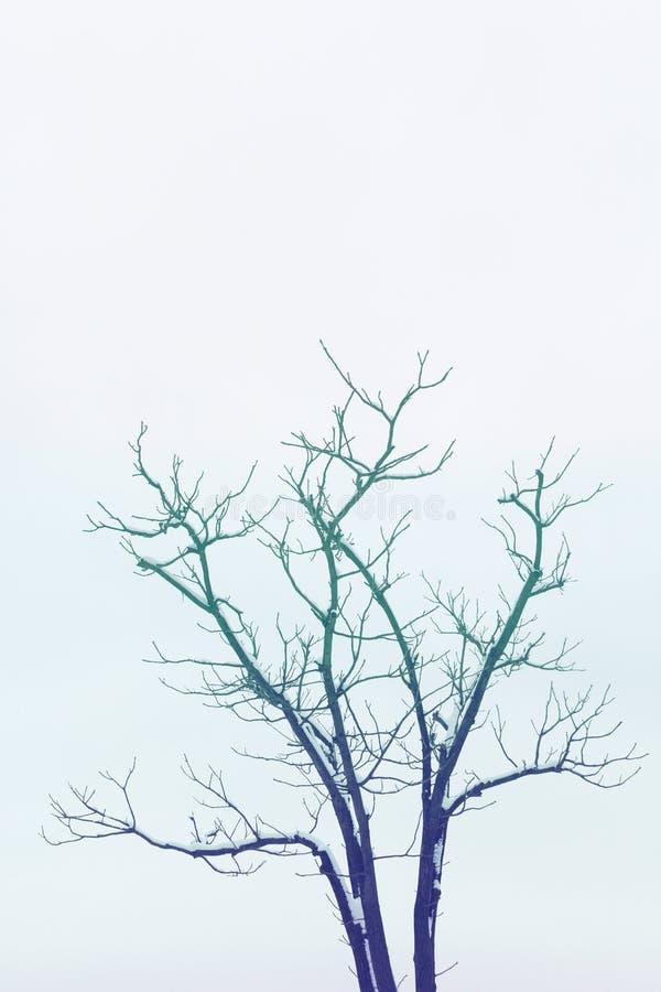 Árvore do inverno imagem de stock royalty free