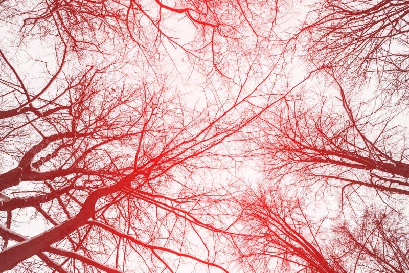 Árvore do inverno imagens de stock royalty free
