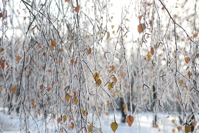 Árvore do inverno com braches e imagem de stock royalty free