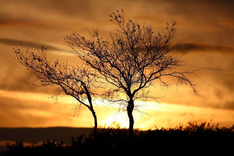 Árvore do inverno da silhueta do por do sol fotografia de stock royalty free