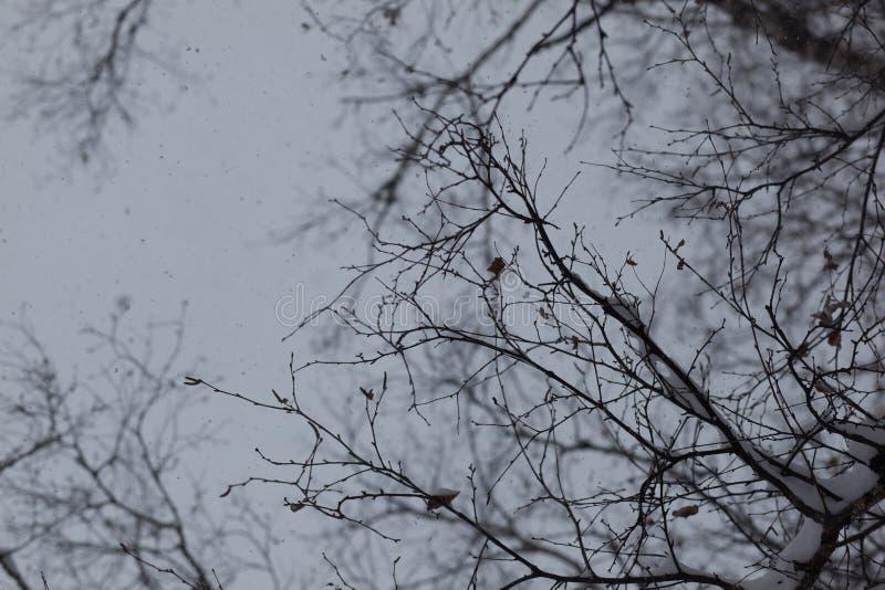 Árvore do inverno Filiais desencapadas Céu e natureza fotografia de stock