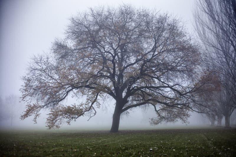 Árvore do inverno na névoa fotografia de stock