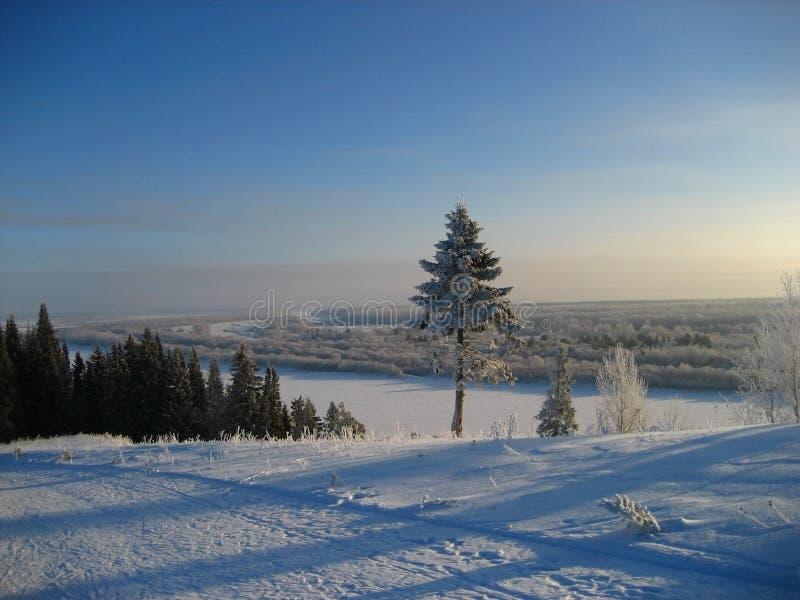 Árvore do inverno no azul imagens de stock