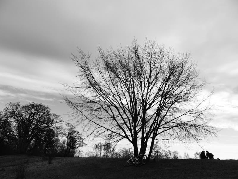 Árvore do inverno que cai no amor imagem de stock royalty free