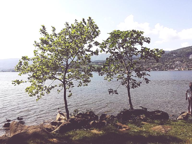 Árvore do lago fotografia de stock