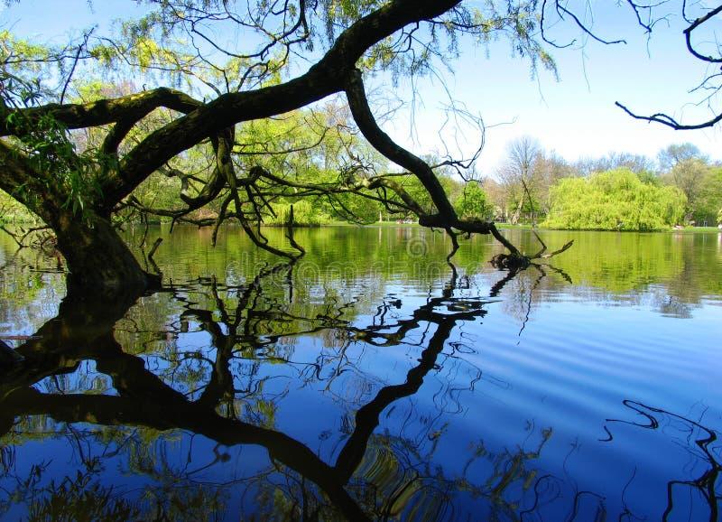 Árvore do lago imagens de stock royalty free