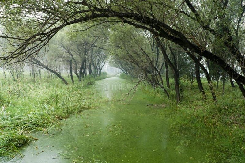Árvore do lago fotografia de stock royalty free