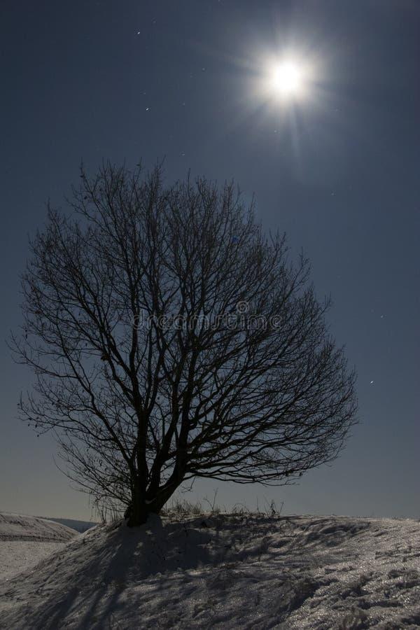 Árvore do luar fotografia de stock