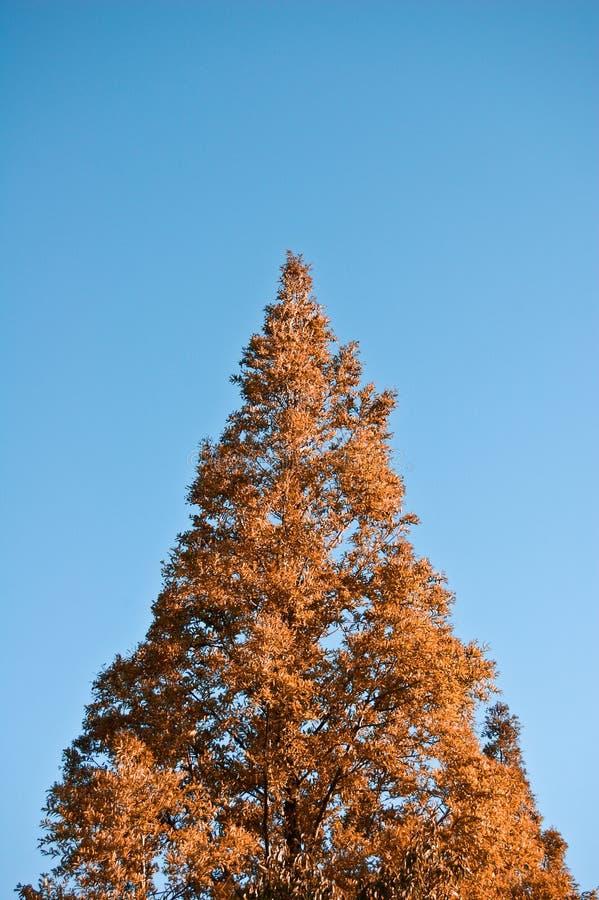 árvore do X-mastro fotos de stock