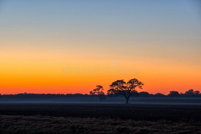 Árvore do nascer do sol por Ripon Califórnia foto de stock