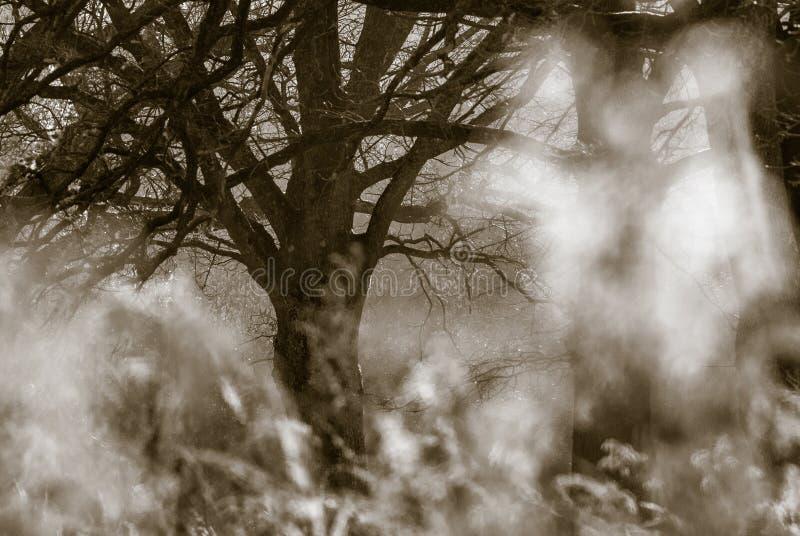 Árvore do outono fotos de stock