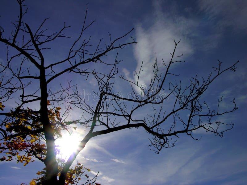 Download Árvore Do Outono & Sol Superior & Céu Azul Foto de Stock - Imagem de paisagem, eixo: 537860
