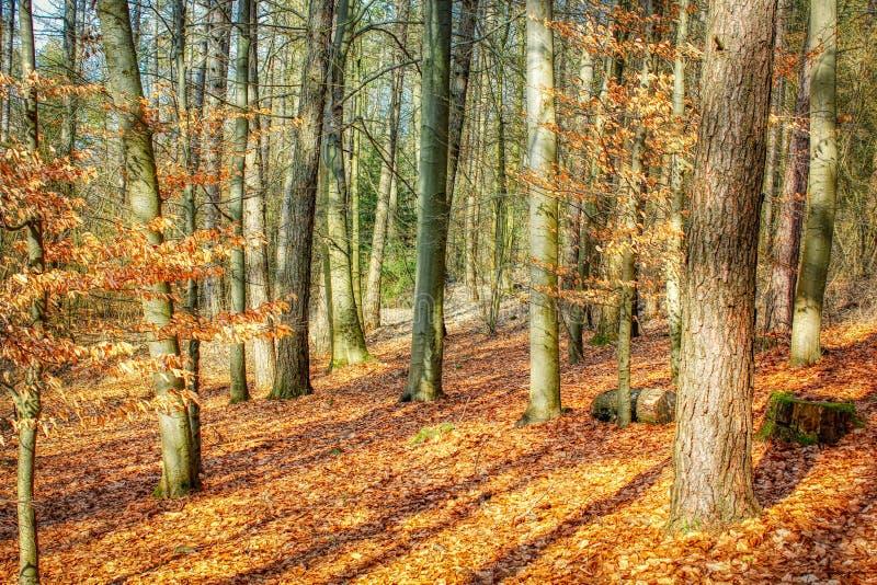 Árvore do outono com as folhas douradas no projeto criativo de HDR foto de stock