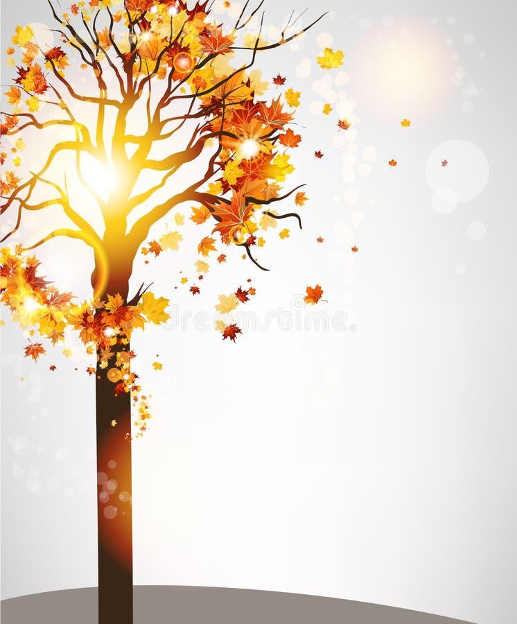 Árvore do outono com folhas bonitas ilustração royalty free
