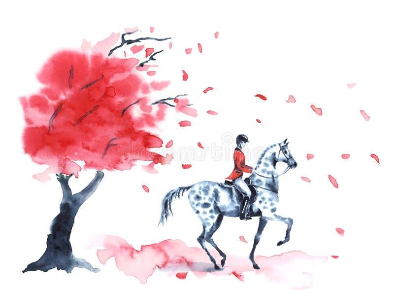 A árvore do outono da aquarela com folhas do vermelho e o cavaleiro e dapple sobre o cavalo cinzento no branco ilustração stock