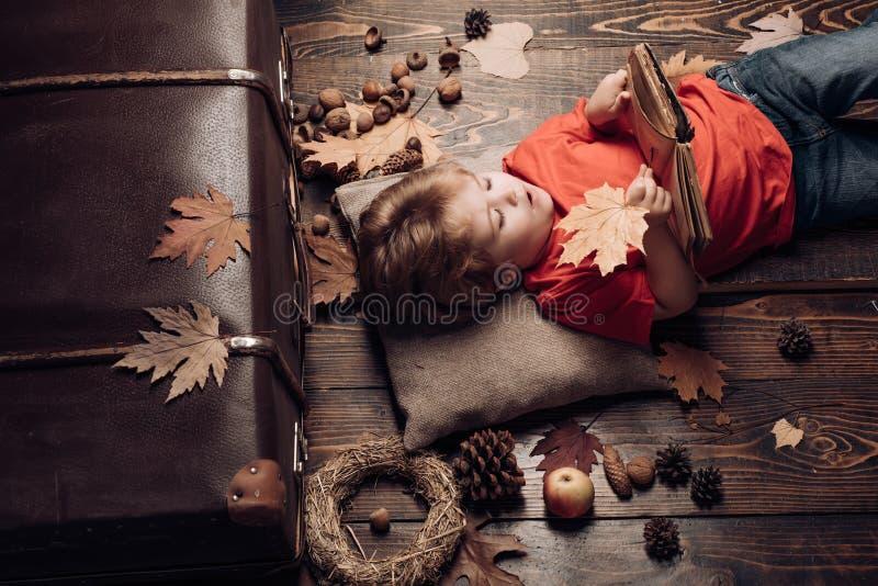 Árvore do outono e conceito de novembro da chuva e do guarda-chuva da floresta do outono PROPAGANDA DE DIGITAL Conceito da propag fotografia de stock