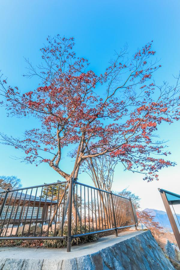 árvore do outono em Ikaho Onsen de Gunma, Japão foto de stock
