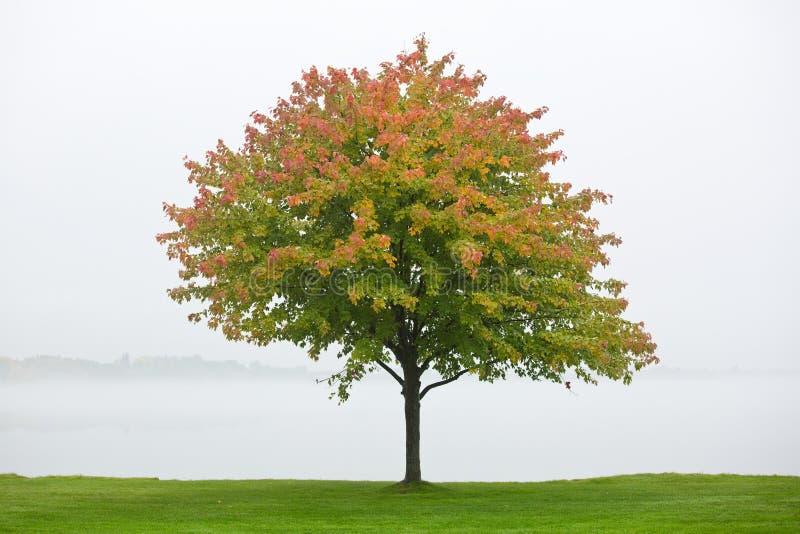 Árvore do outono, lago Cadillac, Michigan imagem de stock