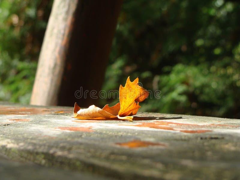 Árvore do outono no banco fotografia de stock