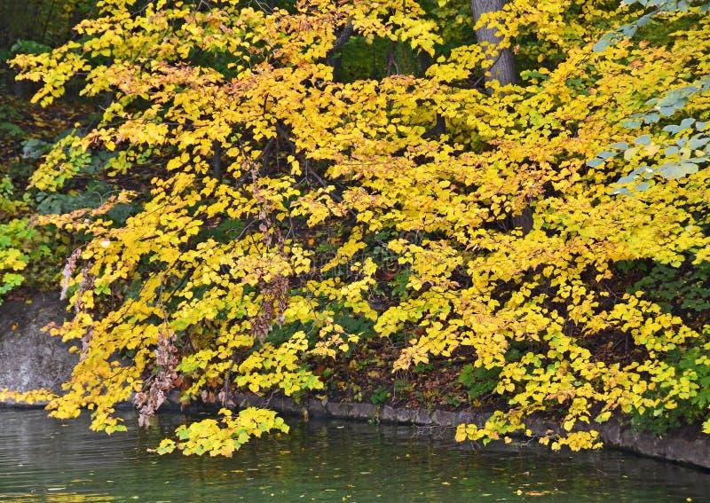 Árvore do parque do outono sobre a água fotografia de stock