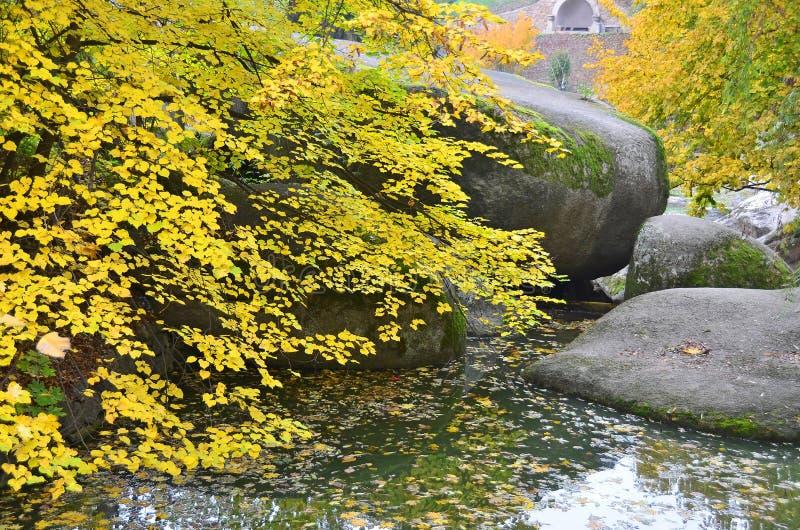 Árvore do parque do outono sobre a água imagem de stock