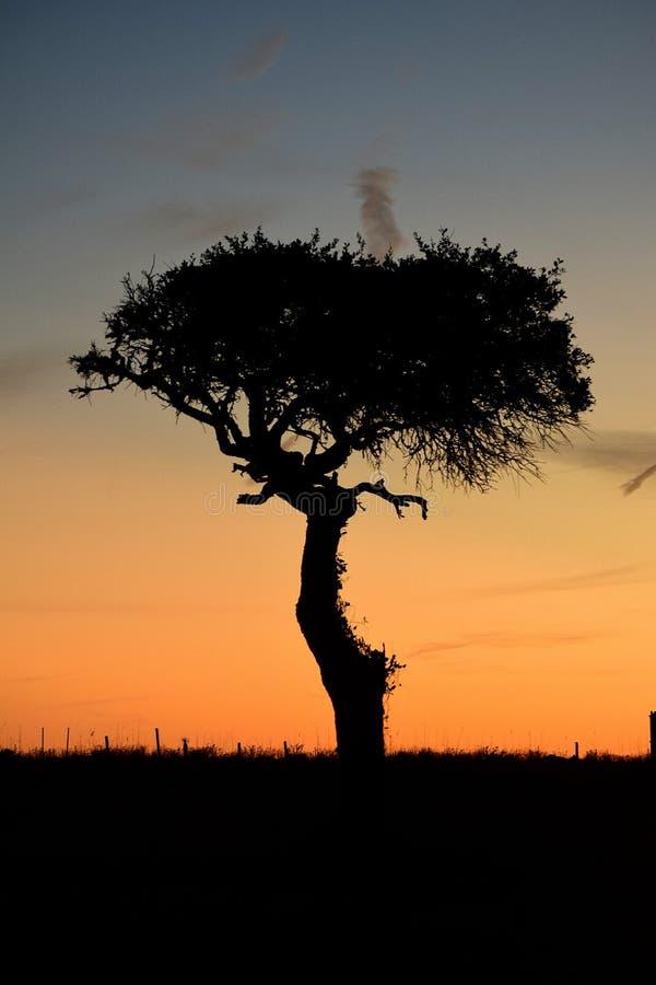 Árvore do por do sol imagem de stock